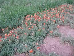 native desert plants june 1 2014 keeper of the seed room desert canyon farm green