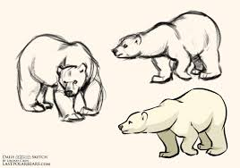 lindsay cibos u0027 art blog daily animal sketch u2013 polar bear warm ups