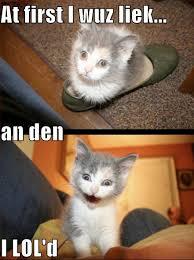 at i wuz like lol cat image