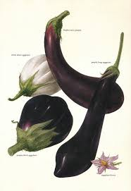 58 best my favorite color eggplant images on pinterest