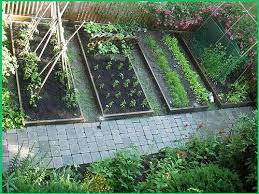 heirloom vegetable garden seeds non gmo hybrid organic survival