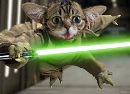Lil Bub Meme - somebody asked for a lil bub yoda edition imgur