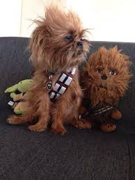 Star Wars Dog Halloween Costumes 30 Dog Halloween Costumes 2017
