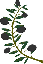 photo of olive branch clipart free best photo of olive
