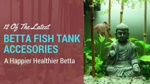 Betta Fish Vase With Bamboo 11 Of The Latest Betta Fish Tank Accessories For 2017 Guide