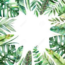 tropical leaves stock photos u0026 pictures royalty free tropical