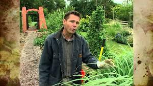 asian vegetable garden youtube