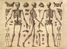 Anatomy Of Human Body Bones 45 Best Vintage Medical Charts Prints Images On Pinterest
