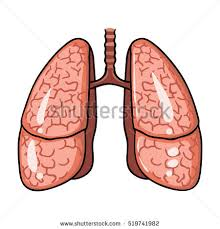 Cartoon Human Anatomy Human Lungs Icon Cartoon Style Isolated Stock Vector 519741982