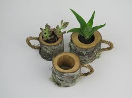 3 rustic succulent planters coffee mugs log planter cactus