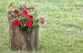 How To Make Planters by How To Make A Tree Stump Planter New England Today