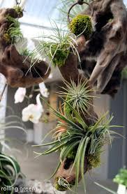 Indoor Plant Arrangements 124 Best Get Your Air Plants At Majestic Farms Images On Pinterest