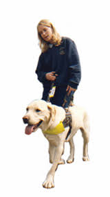 Dogs Helping Blind People What A Guide Dog Does Guide Dogs
