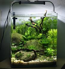 pin by eli lachapelle on aquascaping pinterest aquariums fish