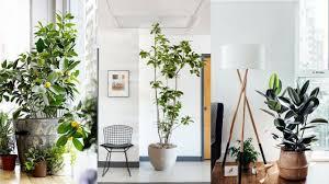 cool indoor plants good indoor plants wonderful indoor plant
