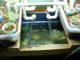 Backyard Greenhouse Designs by 8 Ways How To Build Backyard Aquaponics Greenhouse Home