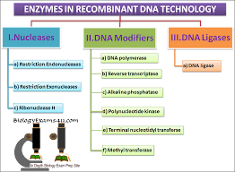 multiple choice questions on biotechnology enzymes in genetic