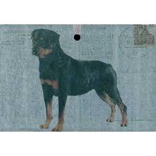 56 best rottweiler stuff images on rottweilers