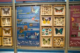 indoor butterfly exhibits u2013 exhibits