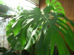 five indoor plants that will clean the air u2013 slow your home