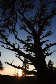 does homeowners insurance cover a dead tree on my property