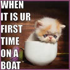 Cat Meme Boat - welcome to jack wild cats and mazes casino mazes and cat memes