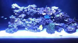 Live Rock Aquascaping Ideas 90 Gallon Reef Build Aquascape Update 9 Youtube