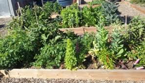 easy crop rotation for your garden deep green permaculture