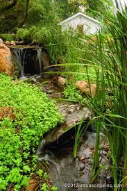 Diy Backyard Pond by 211 Best Pond Ideas Images On Pinterest Pond Ideas Backyard
