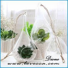 sha small air plant terrarium kit with countryside beach nautical
