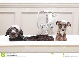 Dogs In The Bathtub Two Dogs In A Bathtub Best Bathtub Design 2017