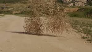 Tumbleweed Hybridized Tumbleweed Species Rapidly Expanding Range In California