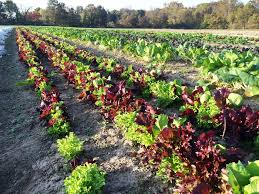 oakway farms localharvest