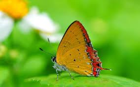 beautiful butterfly desktop hd wallpaper beautiful hd wallpapers