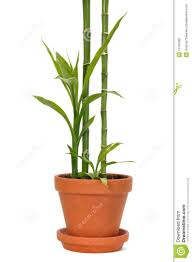 plant stand unbelievable bamboo plant holder image concept green