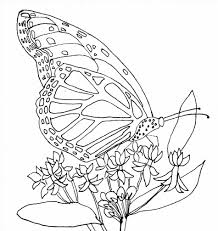 coloring stencils newcoloring123