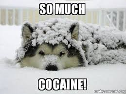 So Much Cocaine Meme - so much cocaine make a meme