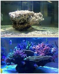 Reef Aquascape Designs Reef Tank Design Ideas Aquascape Idea Marine Aquariums South