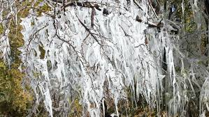 and icicles melting and many icicles hanging from a