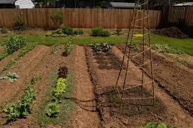 Backyard Photography Ideas Backyard Ideas The World U0027s Best Gardening Blog