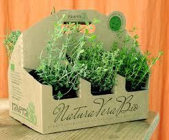 plante aromatique cuisine plantes aromatiques pour votre jardin bio à lyon ou pour votre