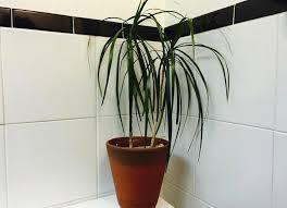 Best Plants For Bathrooms Bathroom Plants 10 All Time Favorites Bob Vila