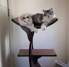 the refined feline lotus cat tower in espresso cat