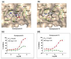 ijms free full text identification of novel small molecules as