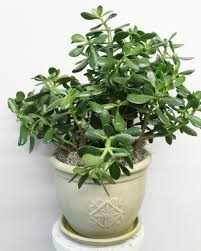 tips for caring for green plants u0026 succulents central square florist
