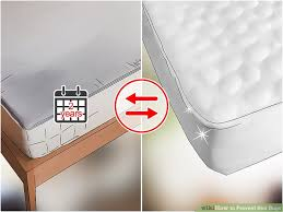 How To Check For Bed Bugs At Home The Best Ways To Prevent Bed Bugs Wikihow