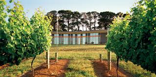 Hill House Mihaly Slocombe - Backyard vineyard design