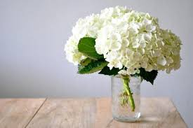 flower hydrangea how to prolong the of hydrangea cut flowers