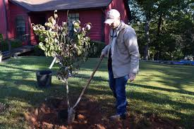 plant a lovely tree this fall with tips from alabama power