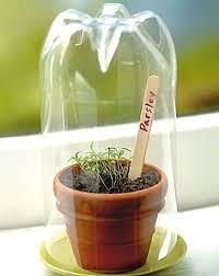 Indoor Herbal Garden Best 25 Indoor Gardening Ideas On Pinterest Water Plants